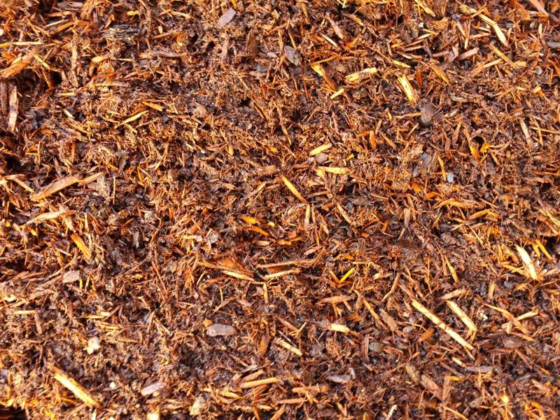 Shredded Pine Bark: Courtland Landscape & Grounds